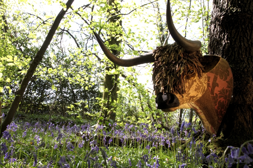 fauxidermy,highland-cattle,bull,taxidermy,brecon-beacons