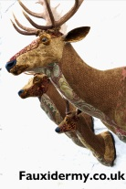 red stag-red deer-fauxidermy-textile taxidermy-fake-fabric-helly powell-fallow deer-roe deer